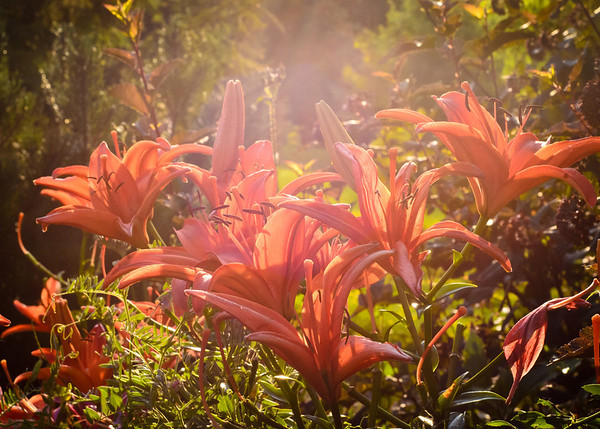 A burst of light to spice up the day