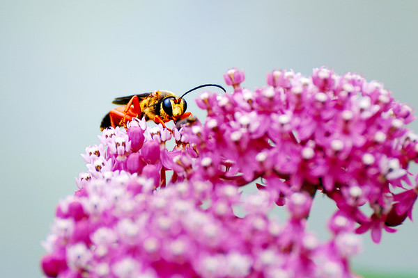 The look - I really wonder how the image rendering is for a bee? Have a great day. Cheers - JY