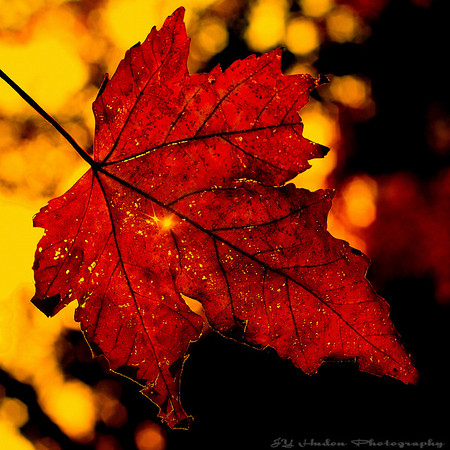Oct 9th, 2007<br /> Autumn is a second spring when every leaf is a flower.  ~Albert Camus