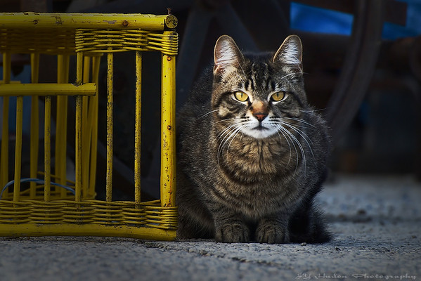 April 30th, 2008 - Another street cat, brothers of the other. One may believe that it is its cage but mistake, no way he will go in there. Have a great day - JY