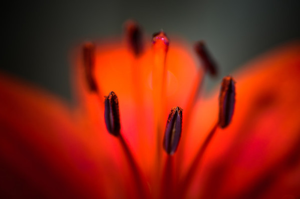 Companion photo from yesterday's picture. Another part of the flower as red as the other!