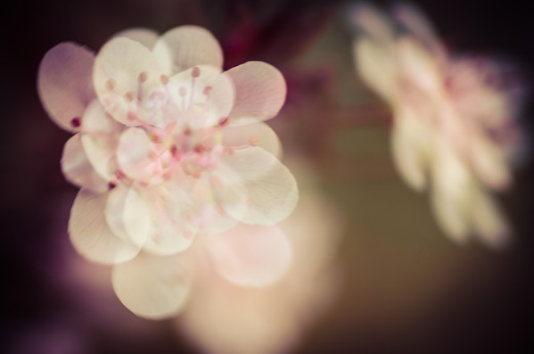 Tiny flowers just came out, the wind made them move just enough. In camera multiple exposures.