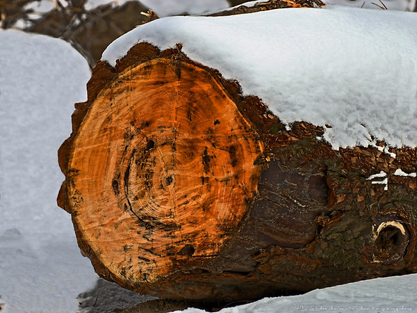 Feb.5th, 2008 - Wood texture that I tried to enhance. The snow cap might tell the a story somewhat. Have a great day!