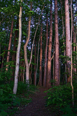 May 26th, 2008 - The light at the entrance of this forest was beautiful. It is pretty inviting to engage in this trail but what could we find? Have a great day - JY