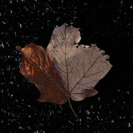 Jan 22nd, 2008<br /> Looking for texture again, this time I caught this leaf on the ice. I was walking on thin ice to get it but the water was not deep. I also tried to create a calm, darker mood. --JY