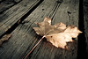 A sure sign of Fall, a symbol of the Canadian winter coming...