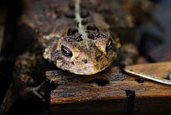 """Holding - """"I had rather be a toad And live upon the vapor of a dungeon Than keep a corner in the thing I love For others' uses""""<br /> <br /> William Shakespeare  (1564-1616)"""