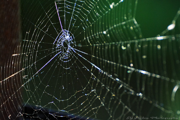 Aug 28th, 2008 = I am caught in a Spider Web. Hopefully, I will be forgiven to buy a new computer, leaving the world of Windows! Have a great day - JY