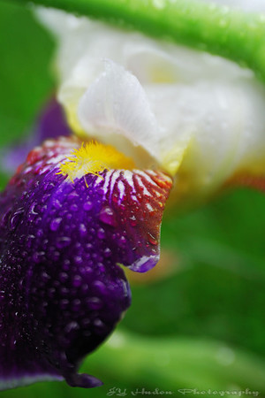 June 18th, 2008 - WE are having our share of rain lately but the flowers enjoy! Have a great day - JY