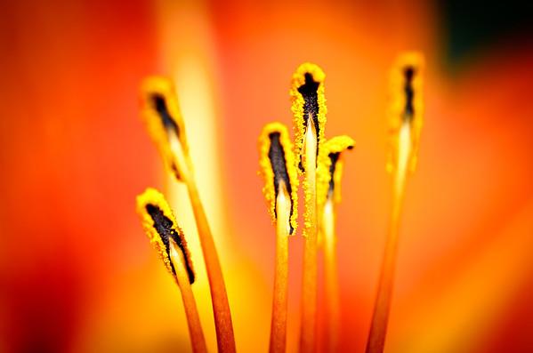 Marvelous flowers in bloom