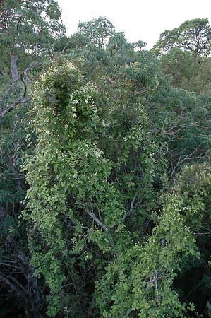 Flora on Lower Vierra Creek - Shell Ridge Open Space 040308