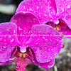 Pink orchid close-up