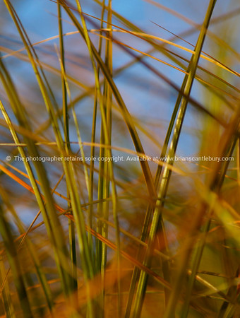 Beach grass abstract.