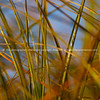 Abstract beach grasses with selective focus.