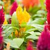 Bright flower garden closeupSelective focus of bright flower garden closeup