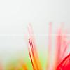 Pohutukawa flower abstract