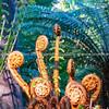 Christchurch Botanical Garden