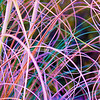 Abstract effect of tangled colours, dried pampas grass.