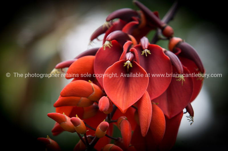Bright red flower close-up