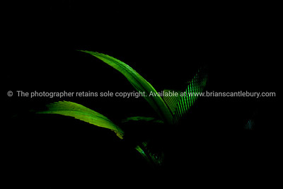 Bright green palm frond