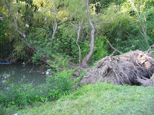 A tree felled by the creek (186_8699)