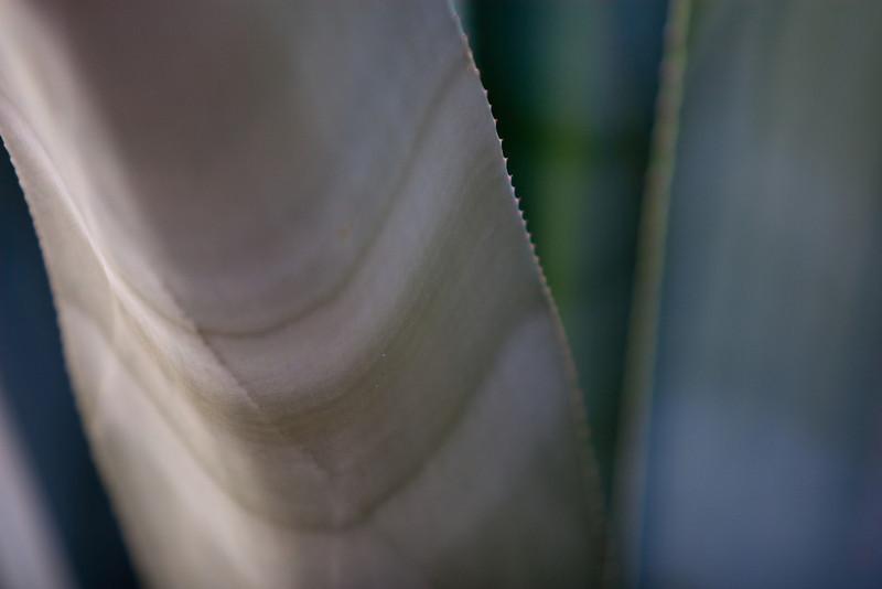 Desert succulent 3