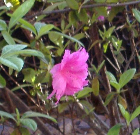 savannah, GA<br /> 03/2007