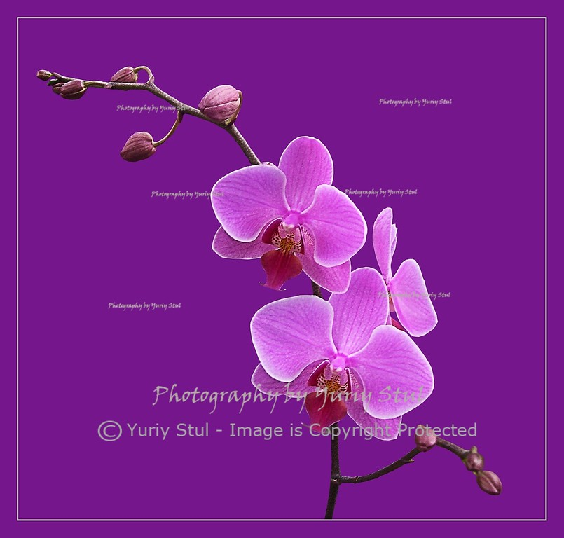 Orchid in the nursery