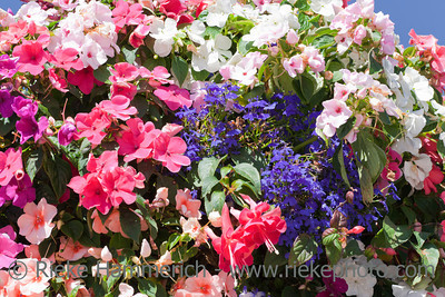 Flowers in Hanging Basket – Close-Up