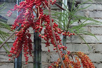 Mirissa - Bamboo Fruits