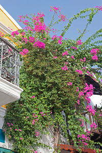 Bougainvillea on traditional townhouses in Kas - Kas, Antalya Province, Turkey