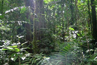 Misahuallí - Ecuadorian Rainforest
