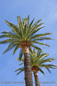 palm trees - french riviera, mediterranean sea - adobe RGB