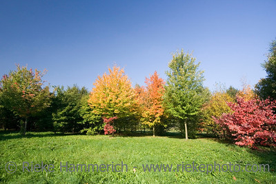 indian summer - trees in autumn colors - adobe RGB