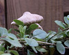 Mushroom<br /> <br /> July 21, 2006<br /> <br /> Baltimore, MD
