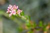 La Jolla flora 01