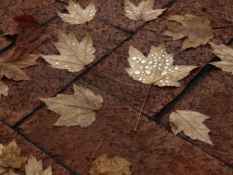 Fallen Leaves<br /> <br /> October 26, 2007<br /> <br /> Baltimore, MD