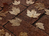 Fallen Leaves<br /> <br /> October 26, 2007<br /> <br /> Baltimore, MD
