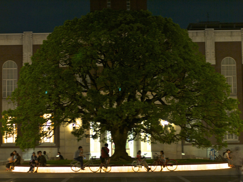 Tree under the clock tower of Kyoto University