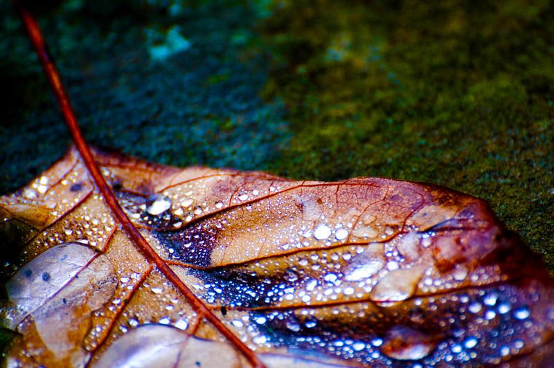 Leaf After A Rain