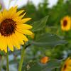 """<a href=""""http://photos.xenogere.com/photo/145/"""">Blog entry</a>"""