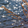 Sunlight, Seeds, and Water