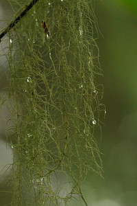 Raindrops on Moss