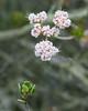 La Jolla flora 02
