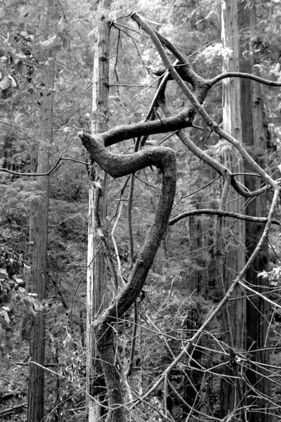 Awesomely cool dead twisted tree