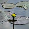 "<a href=""http://xenogere.com/2008/08/11/where-the-world-begins/"">Blog entry</a>"