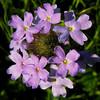 "<a href=""http://xenogere.com/2008/09/17/my-favorite-color-part-5/"">Blog entry</a>"