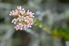 La Jolla flora 03