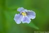 Flower in the Wetlands