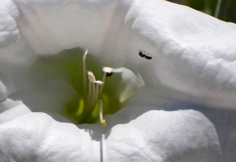 Flower & Insect